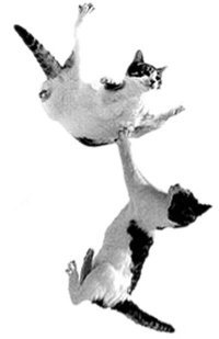 two cats flying
